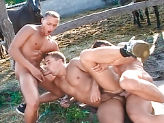 Joe, Thomas & Istvan gain sexually intrigued thinking of horse-hung cocks