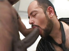 Hairy homosexual throats large black dick