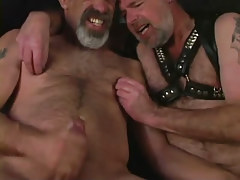 Mature bear faggots jizz by turns