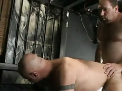 Mature hirsute gays raw fuck in doggy style